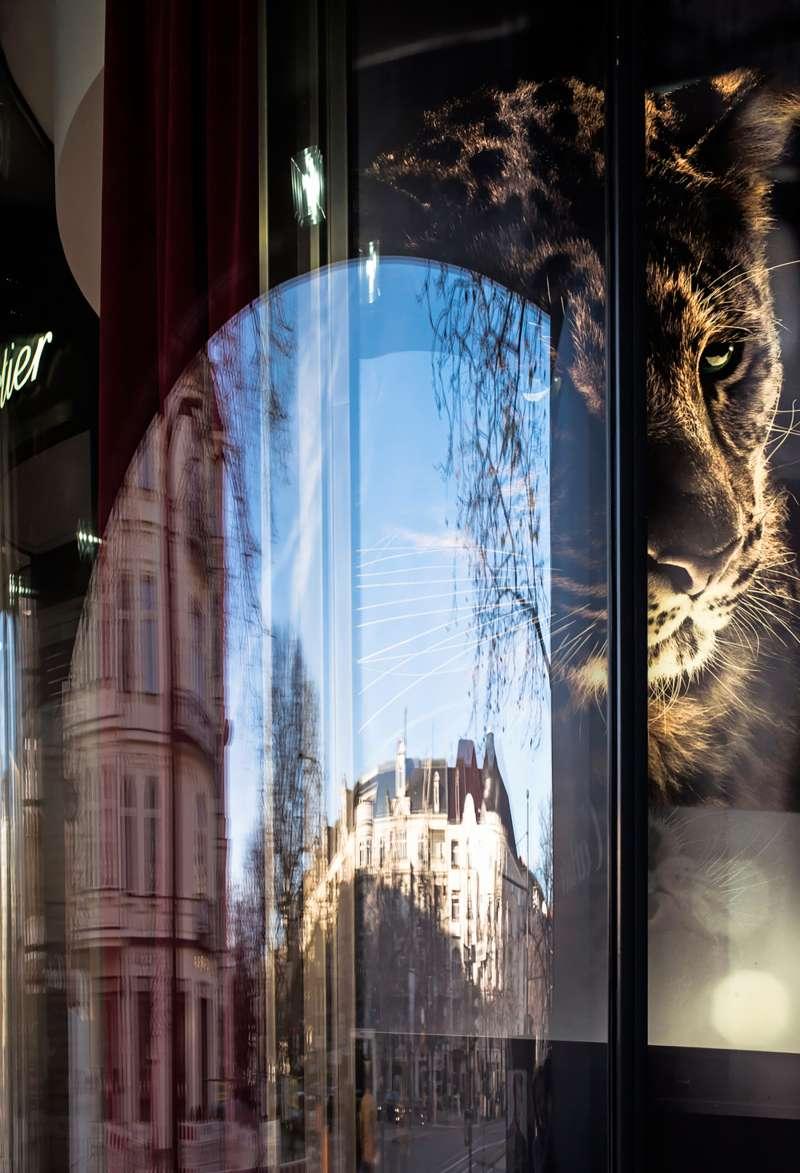 Panthera Berlin
